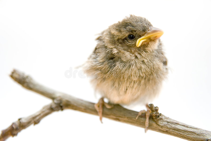 Little bird. On a branch stock photo