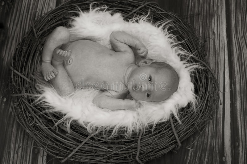 Little Bird Baby Stock Image