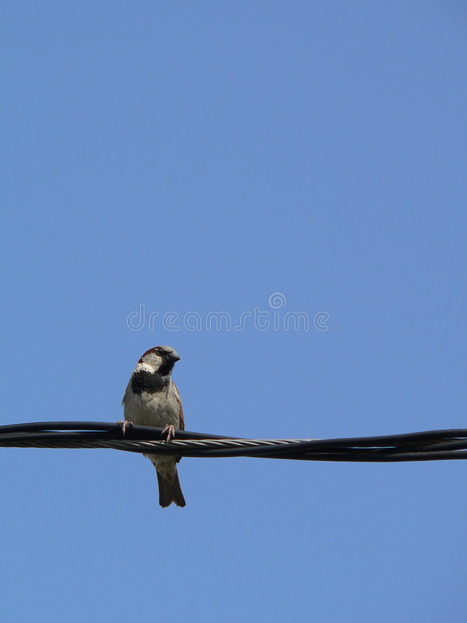 Download Little Bird With Blue Sky 1 Royalty Free Stock Photography - Image: 897807