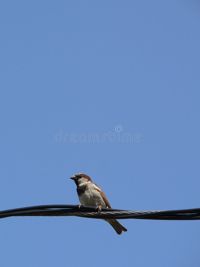 Download Little Bird With Blue Sky 4 Stock Photo - Image: 981338