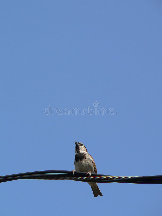 Download Little Bird With Blue Sky 5 Stock Image - Image: 981341