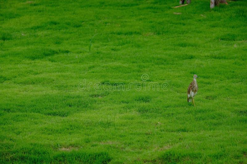 A little bird isolated on green grass background stock image