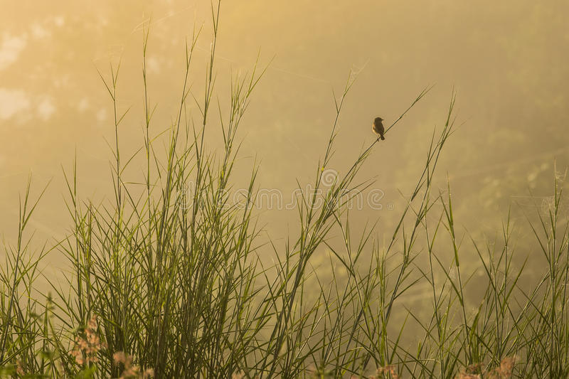 Little bird. Single watching something , hold on the branch sunlight cried in the morning royalty free stock photography