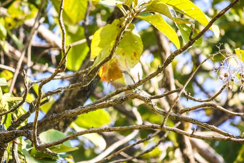 Little bird on trees stock images