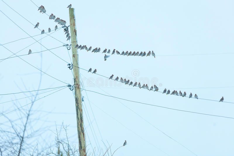 Little birds sitting on a wire against sky stock photos