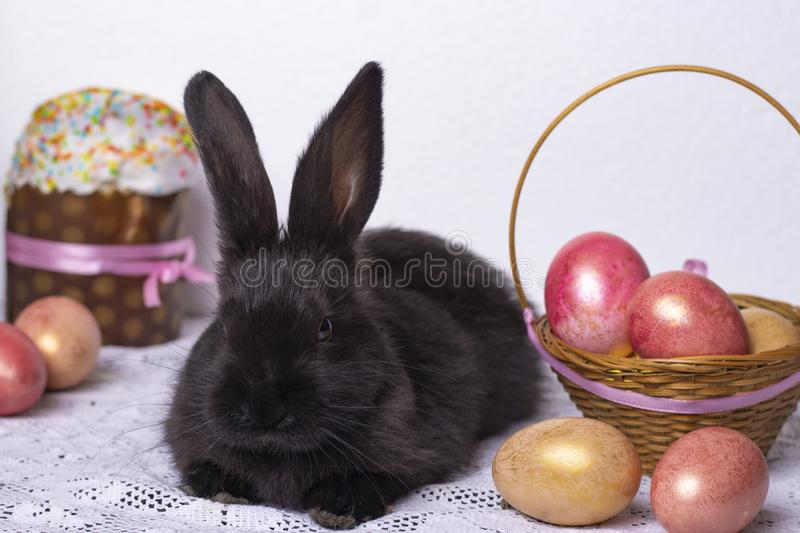 Little black bunny rabbit in the Easter composition with eggs and Easter cakes, the concept of a spring church holiday, horizontal royalty free stock image