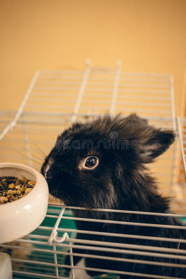 Little black bunny sniffing the food dish in the cage royalty free stock photos