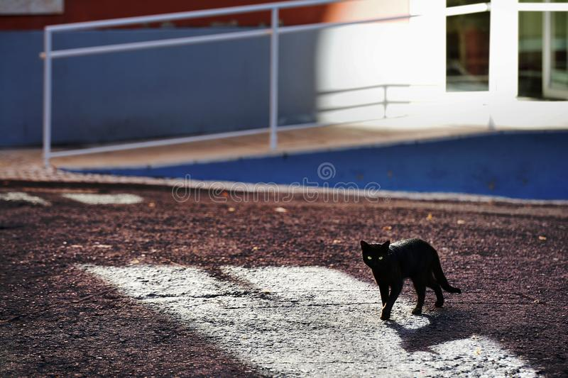 Little black cat. On the streets of Lisbon, Portugal stock photography