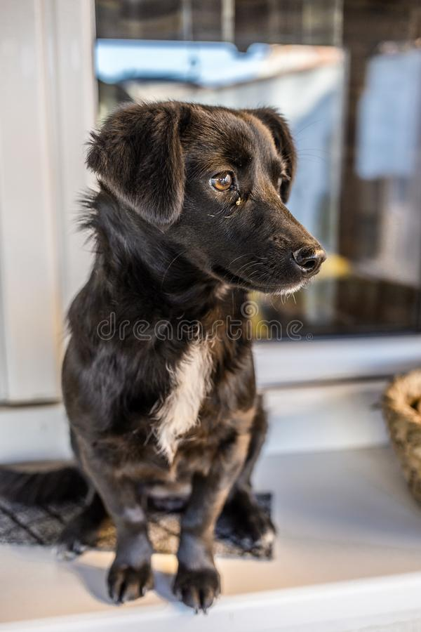 The little black dog sits in front of the house royalty free stock photo