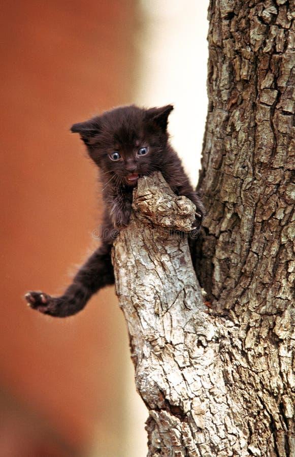 Little black kitten stock images