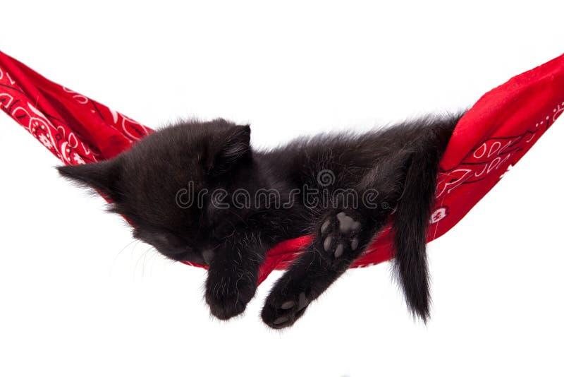 Little black kitten sleeps on a red hammock. royalty free stock images