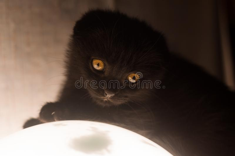 Little black kitty with sad eyes stock photography