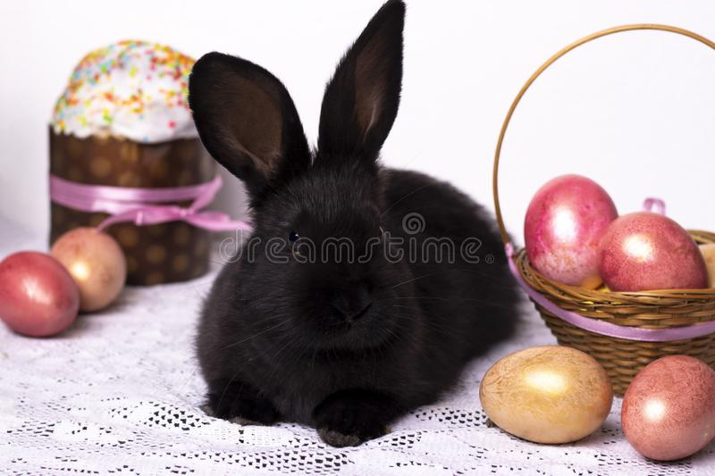 Little black rabbit in the Easter composition with eggs and Easter cakes, the concept of a spring church holiday, horizontal photo. Close-up stock image