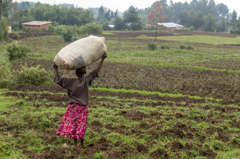 Little black rwandan girl standing in the field with a big crop royalty free stock image