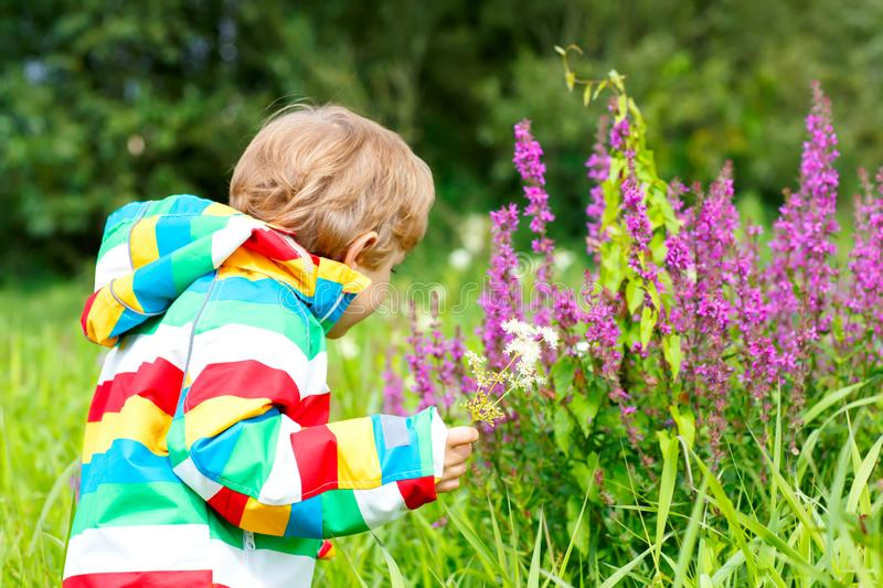 Little blond boy with lot of wild flowers on sunny summer day. Happy child enjyoing nature. Kid with flower bouquet for. Mother royalty free stock photography