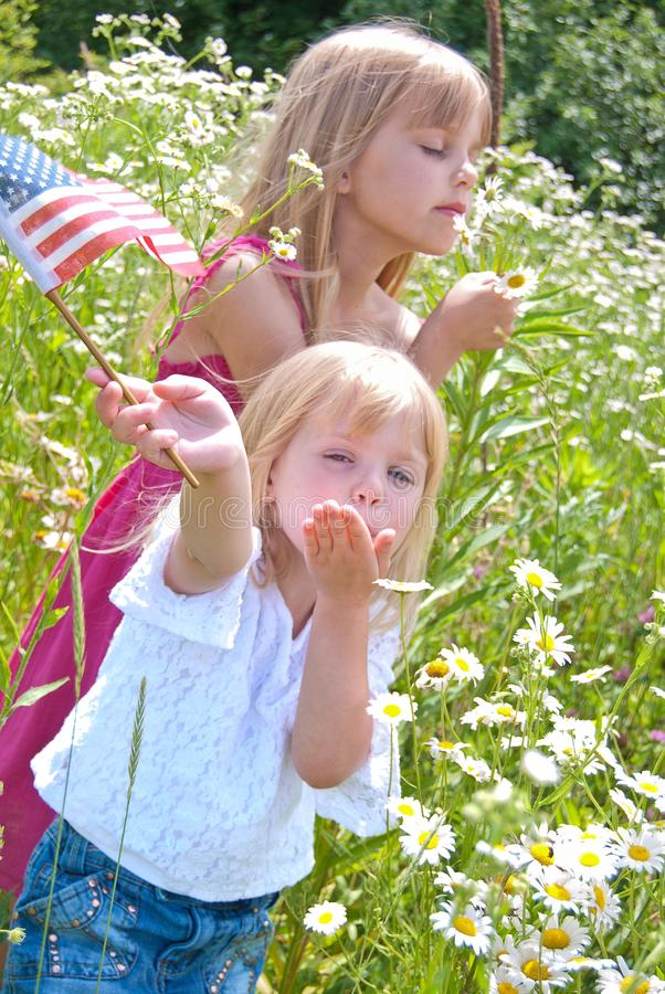 Little blond girls in daisy field with American flag royalty free stock images