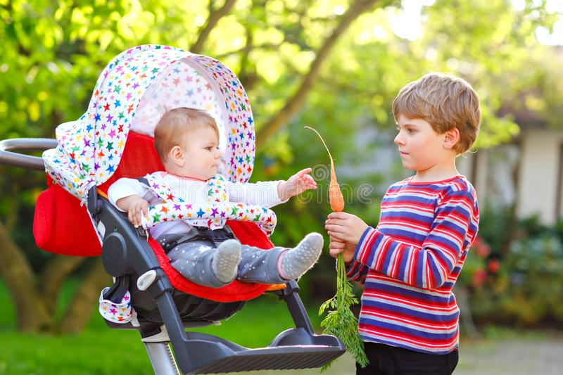 Little blond kid boy giving a carrot to baby sister. Happy siblings eating healthy snack. Baby girl sitting in pram or stock image