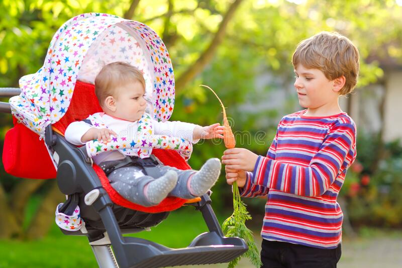 Little blond kid boy giving a carrot to baby sister. Happy siblings eating healthy snack. Baby girl sitting in pram or. Stroller. Brother and cute toddler royalty free stock image