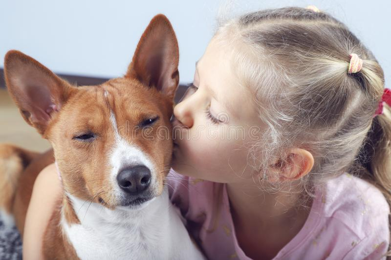 Little blonde curly girl hugging and kissing basenji dog royalty free stock photo