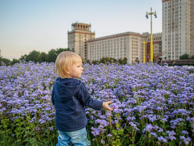 A little blonde girl stands by a flower garden with purple flowers near the stately building of the Stalin era. Warm shades of the setting evening sun stock image