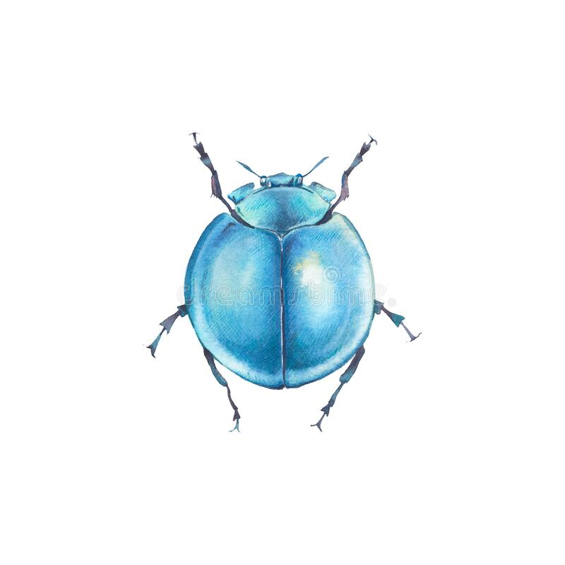 Free Little Blue Bug Royalty Free Stock Photo - 185864995