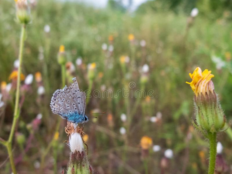 Little blue butterfly sitting on a wild-growing plant flower. Narrow depth of field, blurred floral background stock photo