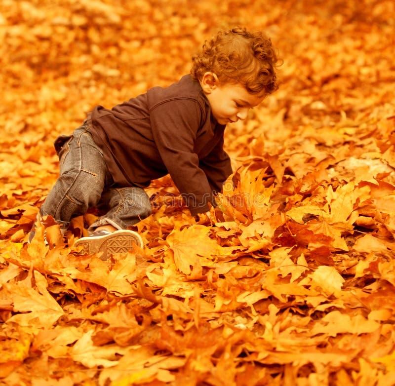 Little boy in autumn park stock images