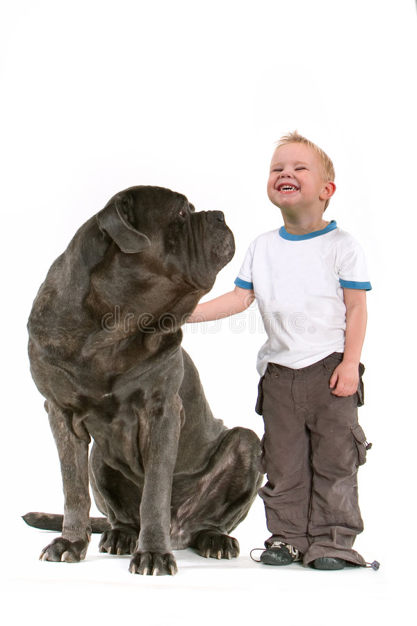 Little Boy With Big Dog. Portrait of a smiling little boy next to a large black dog. Taken in studio, isolated on white background
