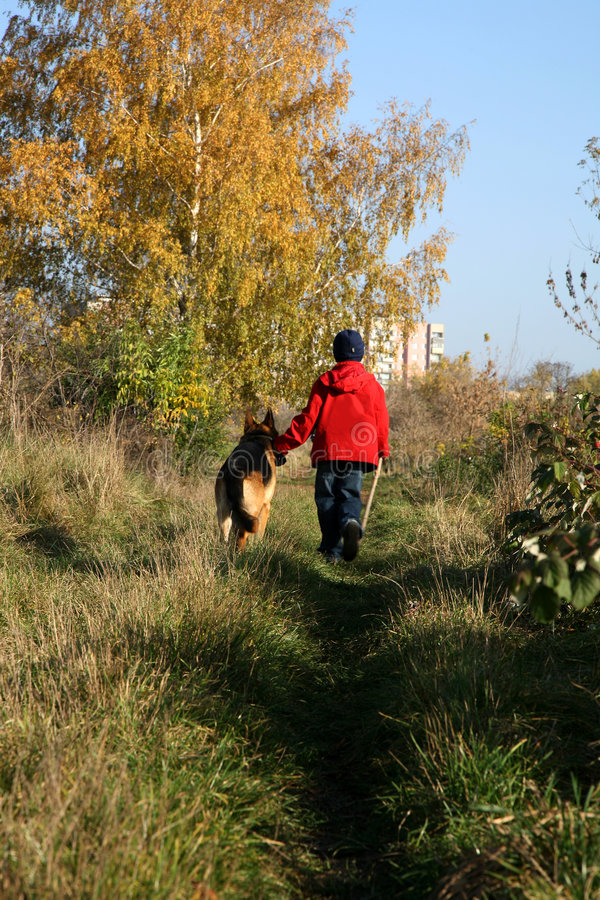 Little boy and big dog (German Shepherd ) stock image