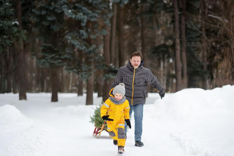 Little boy carries a Christmas tree on a sled to home from the winter forest royalty free stock photo