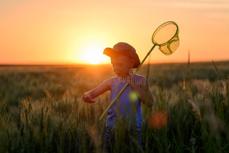 Little boy catching insects at sunset. Silhouetted against the fiery orange sun in his sunhat holding his insect net stock photos