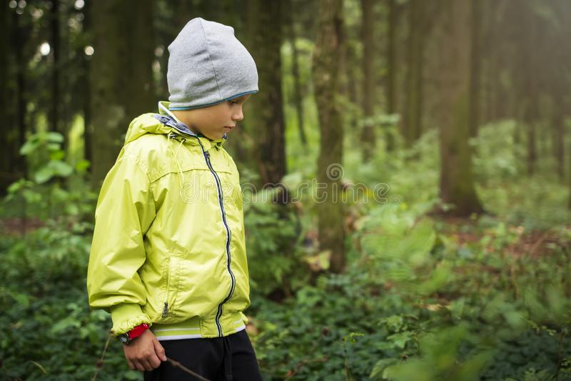 Little Boy chodzi w zielonym lesie przy jesienią Czas wolny aktywność w plenerowym Dziecko Wycieczkuje z dziećmi w lesie obraz stock