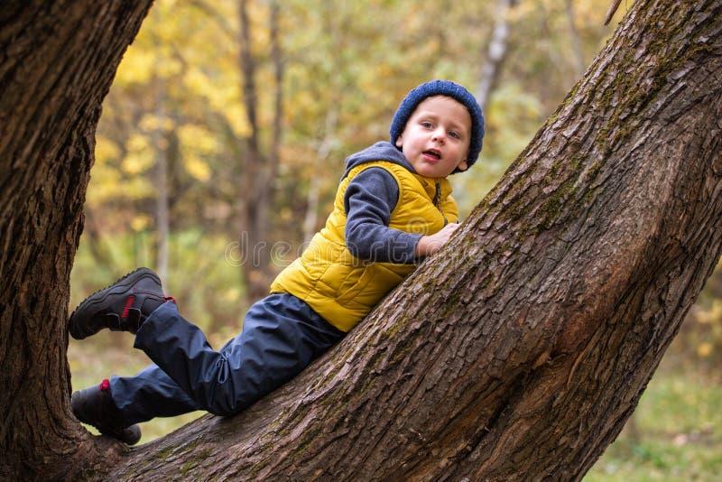 A little boy climbs up a tree royalty free stock photos