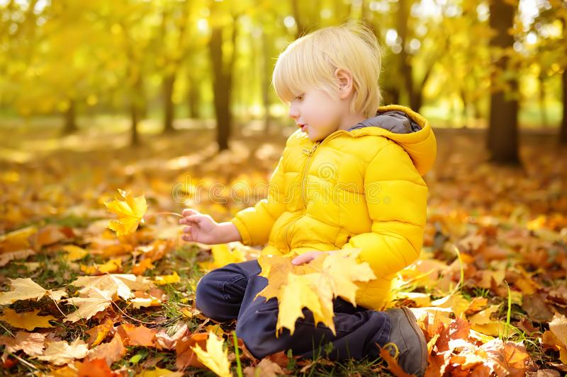 Little boy collecting maple leaves during stroll in the forest at sunny autumn day. Active family time on nature. Hiking with little kids stock photo