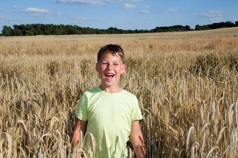 Little boy in the cornfield royalty free stock photo