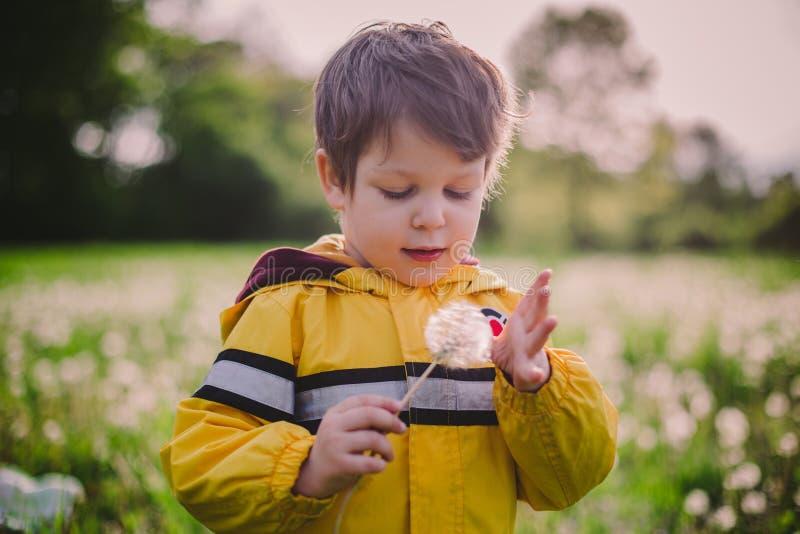Little boy in dandelion field royalty free stock photos