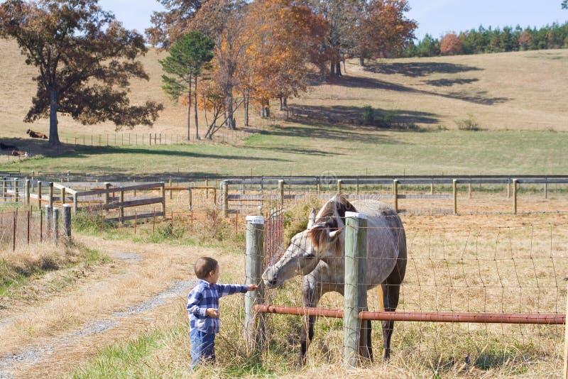 Little Boy dat paard voedt royalty-vrije stock fotografie