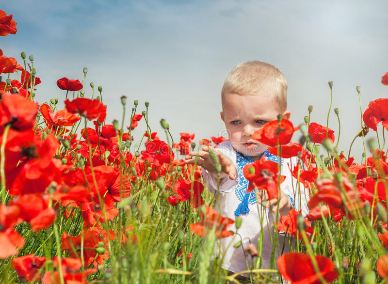 Little boy dressed in ukrainian embroidered costume on the red poppies field. Cute little boy dressed in ukrainian embroidered costume on the red poppies field royalty free stock photo
