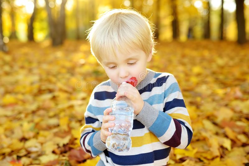 Little boy drinks water during walking at autumn in forest or park royalty free stock image