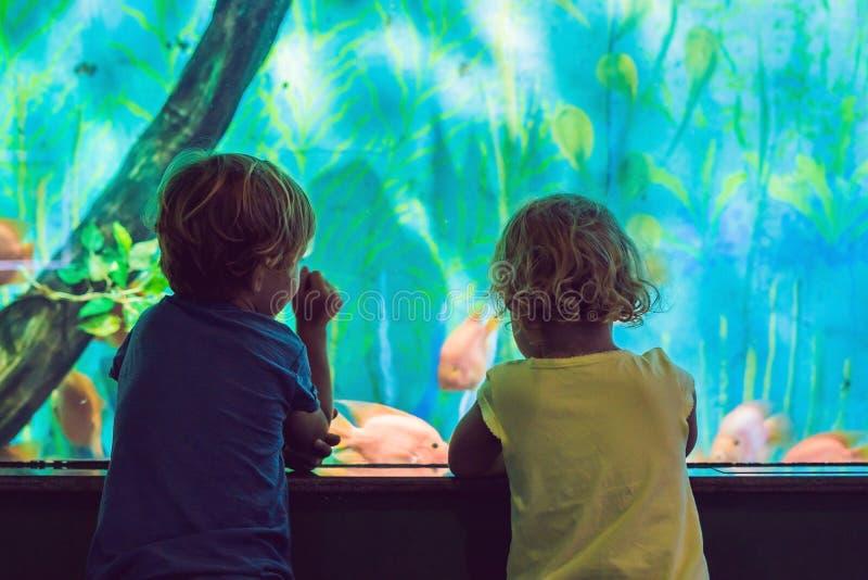 Little Boy e menina que olham peixes corais tropicais no grande li do mar imagem de stock royalty free
