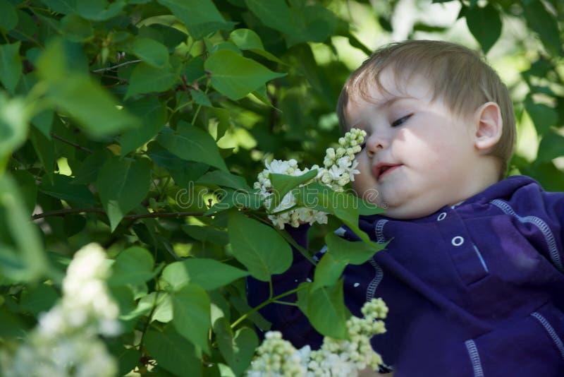 Little Boy em um fundo verde imagem de stock royalty free