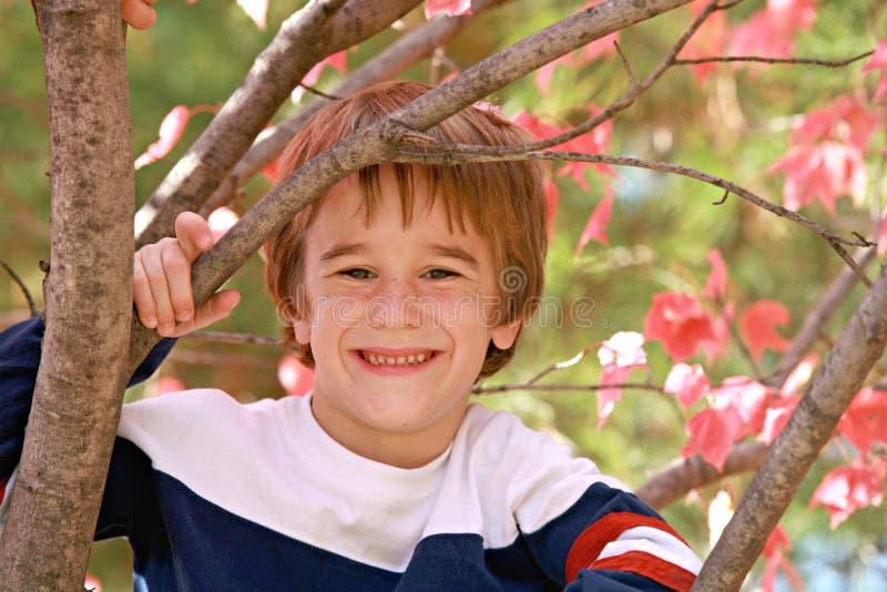 Little Boy em uma árvore imagens de stock royalty free