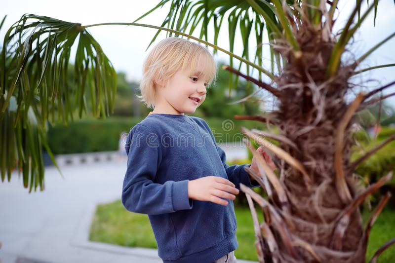 Little boy exploring palm tree. Child first time sees palm tree. Activity for inquisitive child. Travel and tourism stock images