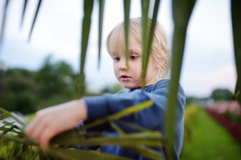 Little boy exploring palm tree. Child first time sees palm tree. Activity for inquisitive child. Travel and tourism royalty free stock photo