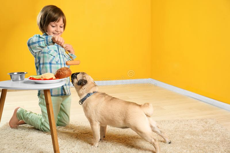 Little boy feeding cute pug dog with sausage at home stock image