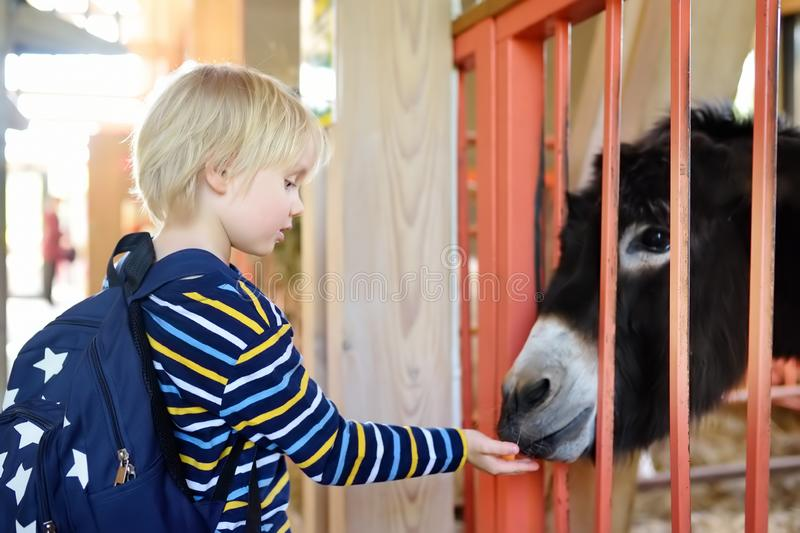 Little boy feeding donkey. Child at indoor petting zoo. Kid having fun in farm with animals. Children and animals. Fun for kids on school holidays stock image