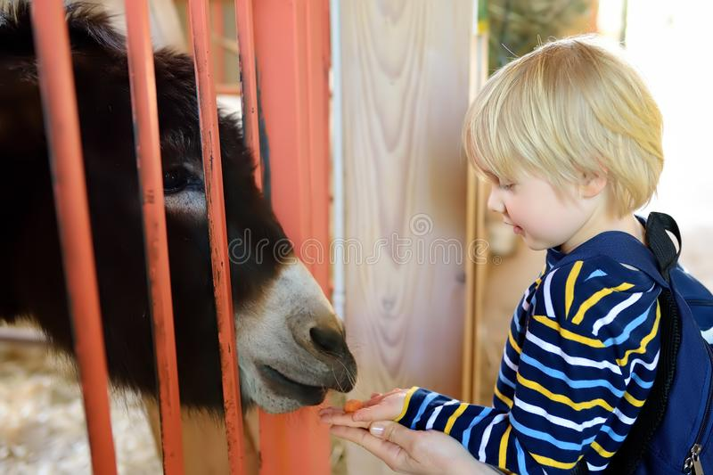 Little boy feeding donkey. Child in petting zoo. Kid having fun in farm with animals. Children and animals. Fun for kids on school holidays stock photography