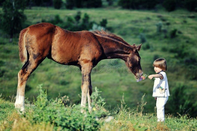 Little boy feeds horse. In paddock stock photo