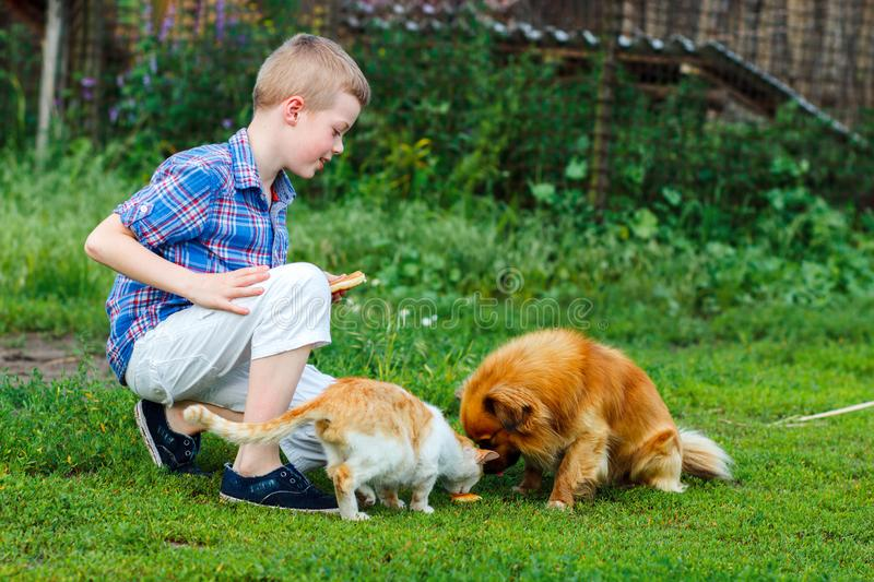 Little boy feeds the stray cat and red-haired homeless dog.  stock photography
