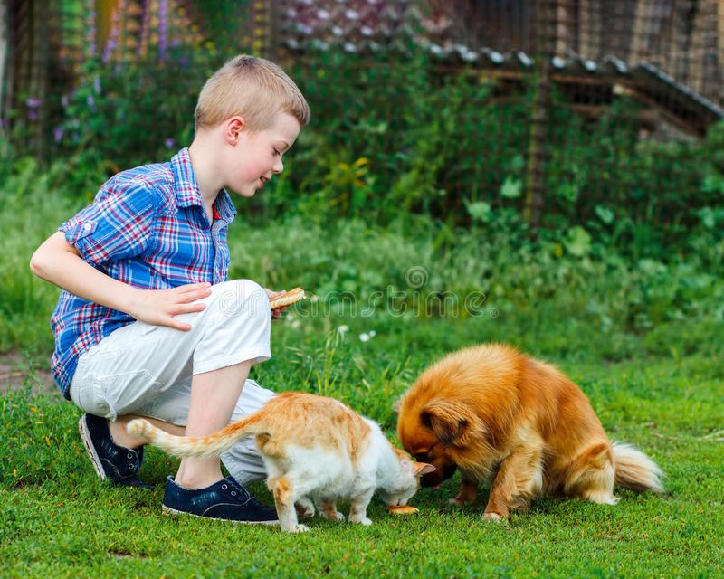 Little boy feeds the stray cat and red-haired homeless dog royalty free stock images